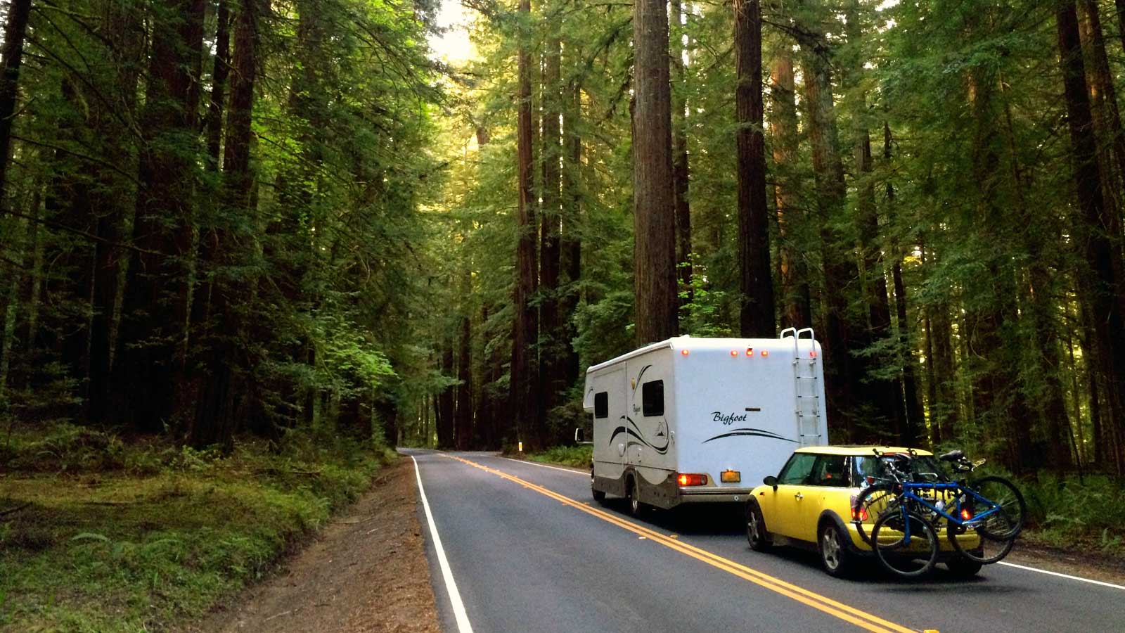 Cruising through the redwood forests in northern California