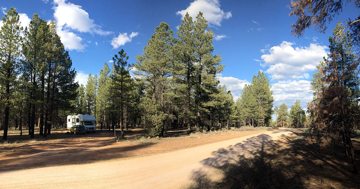 In the high desert of north-central Arizona, you can find solitude in the trees