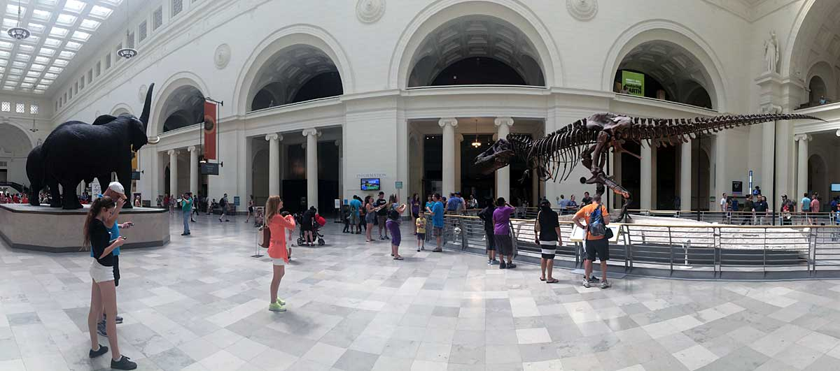 The Field Museum has many fun exhibits, including the most complete T-Rex in the world.